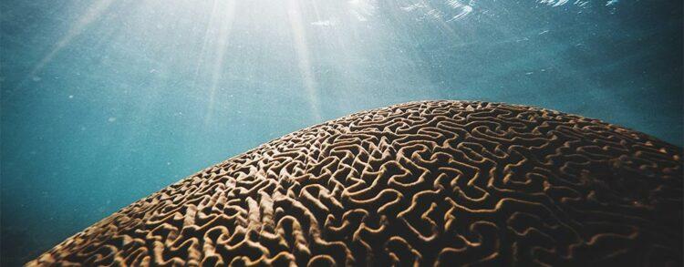 undersea coral